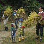 まちやまひろば10月  お米を作ろう② 実りの秋!稲刈り体験 ①10月14日 ②10月15日