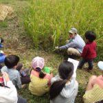 まちやまひろば9月  [お米を作ろう②]実りの秋!稲刈り体験 ①9月29日 ②9月30日