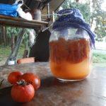 柿酢を作ろう♪ ~胸いっぱいの愛を 樽いっぱいの柿酢を~ 前篇 収穫と仕込み