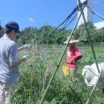援農募集! 都心から間近の里山で自然栽培の収穫をお手伝い♪(初心者歓迎)