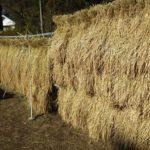 まちやまひろば10月  [お米を作ろう③]脱穀体験 & 新米を食べよう! ①10月27日 ②10月28日
